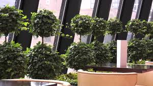 office plant rentals in chicago corporate office plant rentals in