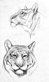 25 unique tiger sketch ideas on pinterest tiger drawing tiger