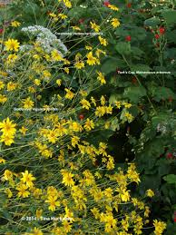 native plants of pacific northwest gardening with native plants my gardener says u2026