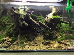 61 best reptile terrarium images on pinterest reptile enclosure