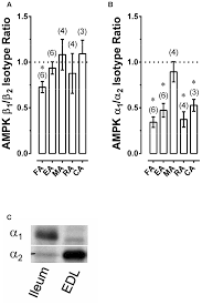 frontiers the amp dependent protein kinase ampk activator a
