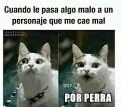 Gato Meme - like por la cara del gato meme by zhukulemcia memedroid