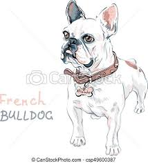 vector of vector sketch domestic dog french bulldog breed
