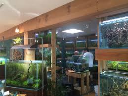 udistrictdaily aquarium zen a meditation on natural aquatic