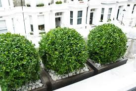 Metal Window Boxes For Plants - window boxes london design installation maintenance london