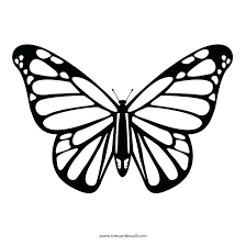 coloring page butterfly monarch coloring pages of butterflies monarch butterfly coloring pages also