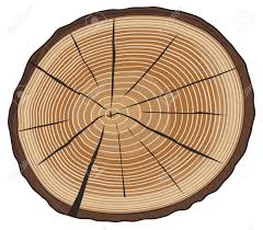 tree rings images Tree rings cross section of tree wood cross section wooden jpg