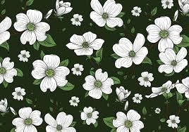 dogwood flowers dogwood flowers background wallpaper free vector