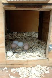 for the birds backyard hens forklift materials u003d u201ceggs cellent