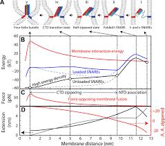 common intermediates and kinetics but different energetics in