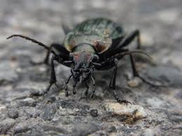 pest control nyc control exterminating nyc exterminator pest