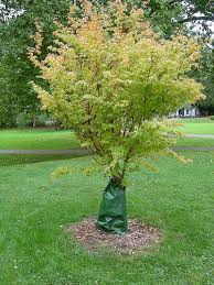 tree watering bags greenwalks