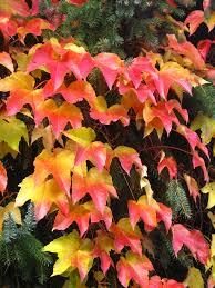 free images tree nature leaf flower petal red botany