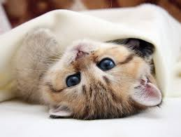 Kitten Bed Win 500 Towards A New Bed With Carpetright Styletails