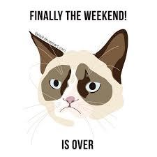 Cartoon Cat Memes - grumpy cat meme weekend by 8xhx8 on deviantart