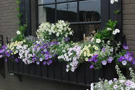 Heat Resistant Plants Container Gardening Dirt Simple