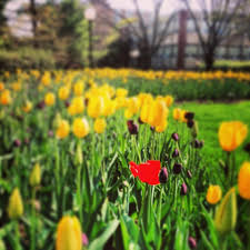 Ashland Flowers - 64 best scenes au images on pinterest higher education ohio