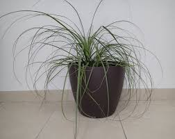 decorative planters plant pots for sale or lease green office