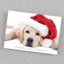 dog christmas cards dog christmas cards greeting cards with puppy dogs