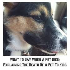 when a pet dies what to say when a pet dies right meow or never