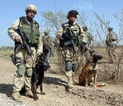 belgian malinois in movies commando dog osama bin laden u0027s four legged foe the washington post