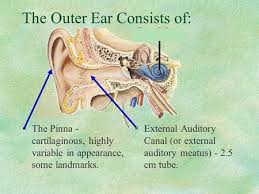 Outside Ear Anatomy Hearing Anatomy Ppt Video Online Download