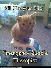 Cute Kitty Meme - best 25 cute kitty ideas on pinterest cute kittens kitty and