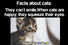Cat Facts Meme - urban dictionary cat facts