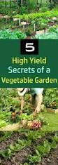 Urban Vegetable Garden by 1985 Best Green Gardenista Images On Pinterest Plants Gardening