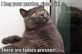 Cat Meme Ladies - lolcats rude lol at funny cat memes funny cat pictures with