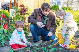 family vegetable garden happy family of three two little boys and father planting seeds