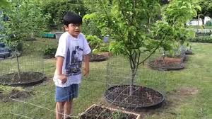 How To Keep Deer Out Of Vegetable Garden by Garden Cage How To Protect Vegetables Herbs Flowers U0026 Plants