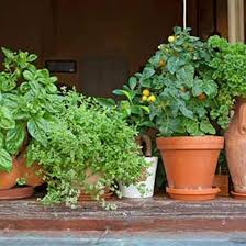 indoor herbs are better than houseplants organic gardening
