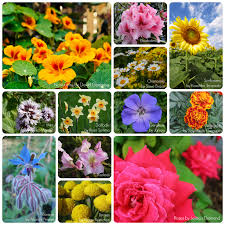 more than just an edible garden mixing ornamental flowers and