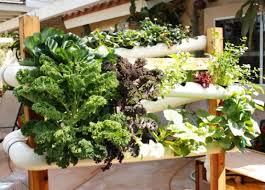vertical gardens gardening on walls and fences