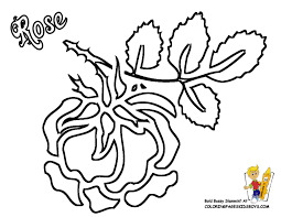 rose flowers coloring pages free yescoloring rose coloring