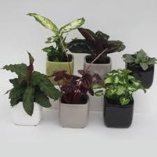 top house plants rainbow park nurseries indoor plants 9cm