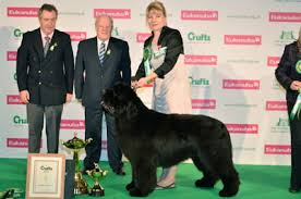 boxer dog crufts 2015 best in show daily