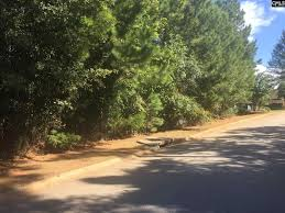 land for sale in chapin sc