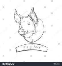 engraving head pig sketch pigs head stock vector 540023011