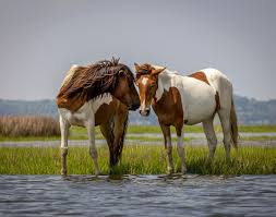 mustang horse the best places to see wild horses in north america travel