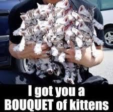 Funny Kitten Meme - i got you a bouquet of kittens cute memes animals cat cats