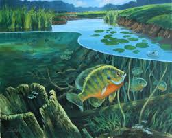 panfish wallpaper borders bluegill crappie panfish all think j would let me buy this and hang it in the living room