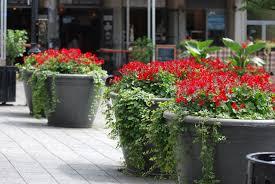 Flowers For Backyard by Garden Design Garden Design With Planting Ideas Garden Design