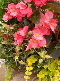 exciting plants for 2014