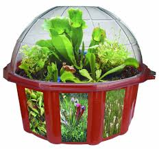 amazon com dunecraft dome terrariums carnivorous plants toys