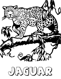 jaguar animal clipart 59
