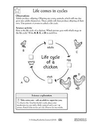 1st grade 2nd grade kindergarten science worksheets life cycles