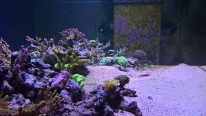 Floating Aquascape Reef2reef Saltwater And Reef Aquarium Forum - scandinavian lagoon project of 265 gallons reef2reef saltwater