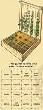 how to start a vegetable garden for beginners a beginner u0027s guide to gardening no green thumb necessary